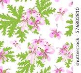 Rose Geranium Theme. Seamless...
