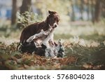 Stock photo two border collie puppy playing 576804028