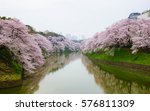 cherry blossoms tunnel across... | Shutterstock . vector #576811309