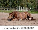 chestnut horse rolling in the... | Shutterstock . vector #576878206