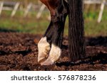 close up of horse legs and tail ... | Shutterstock . vector #576878236