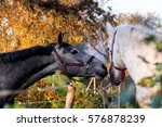 two friendly horses playing... | Shutterstock . vector #576878239