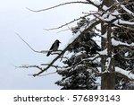 winter park. | Shutterstock . vector #576893143