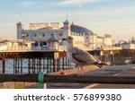 Brighton Pier And A Seagull ...