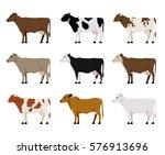 nine milk cows different breeds ...   Shutterstock .eps vector #576913696