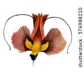 watercolor flying bird of... | Shutterstock . vector #576988210