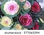 beautiful vegetable from japan | Shutterstock . vector #577065394