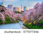chidorigafuchi park during the... | Shutterstock . vector #577077346