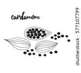 cardamom vector illustration....   Shutterstock .eps vector #577107799