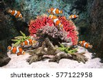 Sea Corals And Clown Fish In...