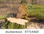 deforestation | Shutterstock . vector #57715465