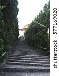 Small photo of Concrete stairs and Pine growing alongside the way.