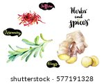 herbs and spices kitchen... | Shutterstock . vector #577191328