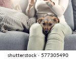 contented little dog sleeping... | Shutterstock . vector #577305490