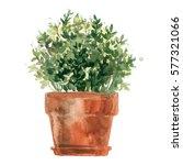 herbs in a flowerpot. oregano... | Shutterstock . vector #577321066