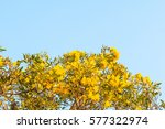 Tree Of Gold Branches With...