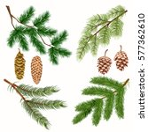coniferous tree branches with... | Shutterstock .eps vector #577362610