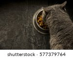 Stock photo grey cat eating food 577379764