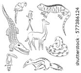 hand drawn animals of south... | Shutterstock .eps vector #577386124