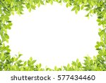 Green Leaf Border Isolated On...