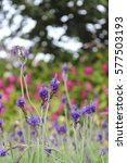 flower | Shutterstock . vector #577503193