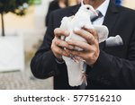 close up of white dove in the... | Shutterstock . vector #577516210