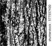 texture bark. nature black... | Shutterstock .eps vector #577557430