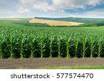 corn field in the picturesque... | Shutterstock . vector #577574470