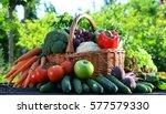 variety of fresh organic... | Shutterstock . vector #577579330