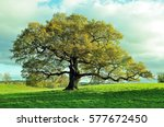 old oak tree in an english... | Shutterstock . vector #577672450