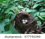 Cute Nest With Three Eggs Of...