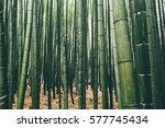 Green Bamboo Forest In Japan.