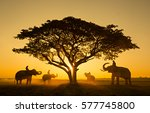 silhouette elephant on the... | Shutterstock . vector #577745800
