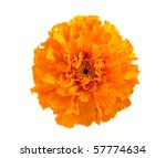 Marigold Flower On A White...