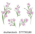 floral bouquet set. wild ... | Shutterstock .eps vector #577750180
