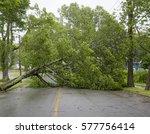 Large Tree Fallen Across A Roa...