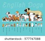 english dogs size comparison... | Shutterstock .eps vector #577767088