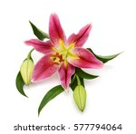 beautiful red lily flowers...   Shutterstock . vector #577794064