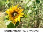 closeup a pollen of white... | Shutterstock . vector #577798993