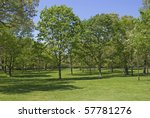 A spacious lawn and beautiful green trees during the Spring season at The Bayard Cutting Arboretum on Long Island. - stock photo