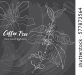 hand drawn sketch coffee tree.... | Shutterstock .eps vector #577873564