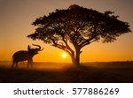 Silhouette Elephant On The...