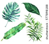 Set Of Watercolor Botanical...