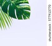 tropical plants on white... | Shutterstock . vector #577913770