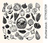 hand drawn vector set of... | Shutterstock .eps vector #577935709