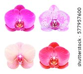 Collection  Of Orchid Isolated...