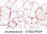 Stock photo hydrangea petals isolated 578029939