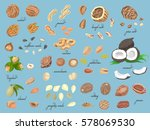 big collection of isolated... | Shutterstock .eps vector #578069530