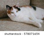pretty calico cat. a pet. | Shutterstock . vector #578071654