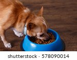 chihuahua dog eat feed. bowl of ... | Shutterstock . vector #578090014